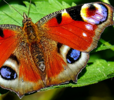 image of a multicoloured butterfly on a green leaf